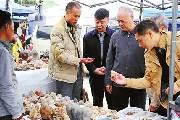 韶关奇石文化节举行 数十万件奇石亮相