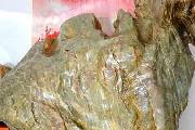 华安玉奇石 形似真鸡寓意如意