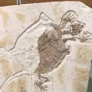 """亿年古生物化石""""落户""""上海自然博物馆"""