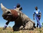 犀牛农场收割犀牛角
