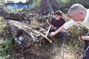 杂货院摆了5年的木头竟是价值2000万元的金丝楠木