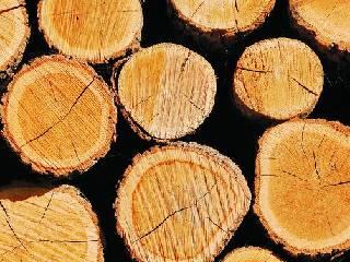 世界各国市场趋势 各品类木材价格一览