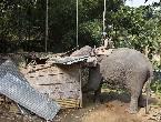 印度出动大象强拆
