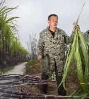 甘蔗大豐收 農民卻倒苦水