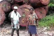 非洲十大常见硬木木材