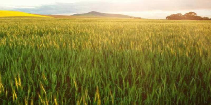 农业概念股