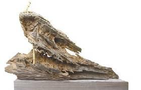 香淹坝成阴沉木富集区 真的价值几个亿?