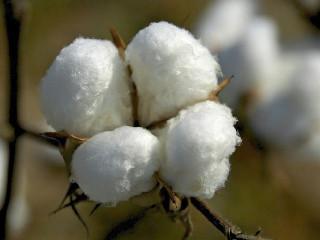 2018年1月越南进口棉花大增