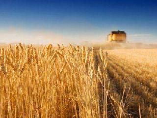 黑海小麦亚洲市场报价上涨 供应吃紧