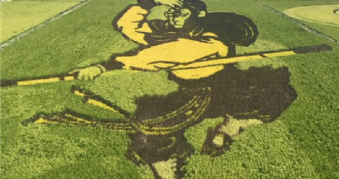 稻田里的巨幅画作