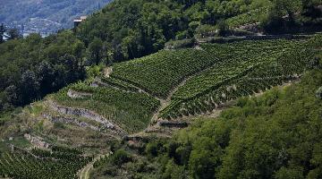 罗讷河谷葡萄酒2017年出口总量达到2.7亿升