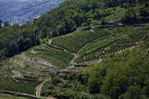 2017年罗讷河谷产区葡萄酒出口总量达到2.7亿升