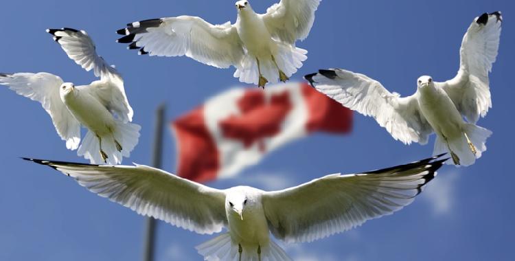 加拿大加息成板上钉钉 美元兑加元或将下跌