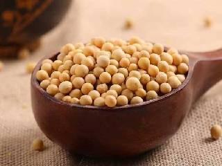 王伟明委员:发展大豆食品,引导大豆产业与中医药等产业融合