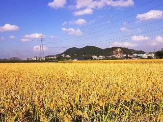 加快处理超期超标稻谷 促进生物乙醇发展