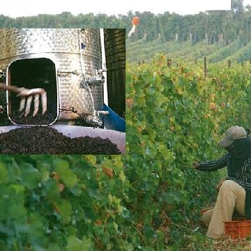 以色列国际红酒名庄——挪亚酒庄