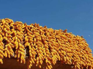 玉米首次出现年度内产不足需