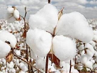 棉价不具备趋势性上涨的基础