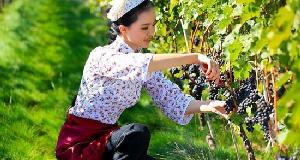 从房地产转行葡萄酒业 致力打造民族产业