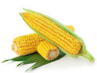 玉米价格反季节性上涨原因在这!