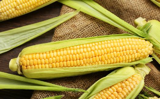 武汉8万亩甜玉米迎丰收 比瓜还甜的玉米上市啦!