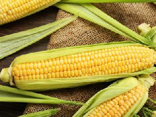 涨价势头不减 玉米期货价格过高了吗?
