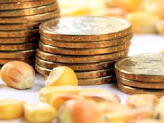 市場多方齊發力 現貨玉米價格震蕩調整