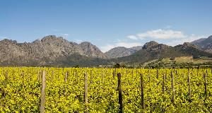朱卡迪酒庄:出产卓越葡萄酒的精品酒庄