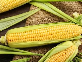 接连创新高 玉米现货价格何时会降温?