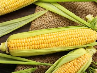 供强需弱格局下 本周玉米价格或有所回调