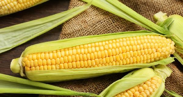 玉米面临秋收压力 市场维持震荡下行