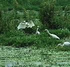 景点大全-重庆三多桥白鹭园