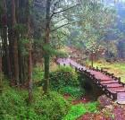 景点大全-台湾阿里山景区