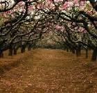 景点大全-青海民和桃花园林