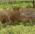 景点大全-上海野生动物园
