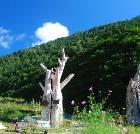 景点大全-滦平白草洼国家森林公园