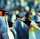 景点大全-烟台蓬莱海洋极地世界