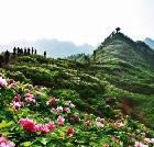 景点大全-垫江牡丹生态旅游区