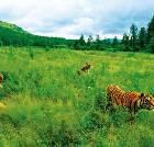 景点大全-珲春东北虎国家级自然保护区