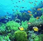 景点大全-海南三亚珊瑚礁国家级自然保护区
