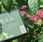 景点大全-台北植物园