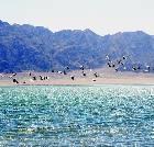 景点大全-阿克塞苏干湖候鸟自然保护区