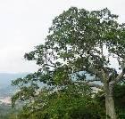 景点大全-亚龙湾热带天堂森林公园