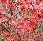 景点大全-大连龙王塘樱花园