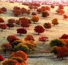 景点大全-内蒙古科尔沁草原