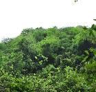 景点大全-古丈坐龙峡国家森林公园