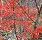 景点大全-辽宁大地森林公园