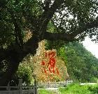 景点大全-宁波九龙湖旅游区