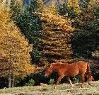 景点大全-山西芦芽山国家级自然保护区