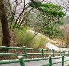 景点大全-陕西木王国家森林公园